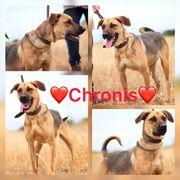 Kastrierter Hund Rüde Chronis 4