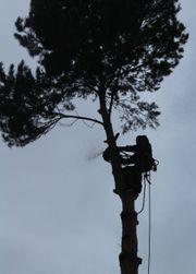 Baumschnitt meisterliche Baumpflege Baumfällungen stückweise