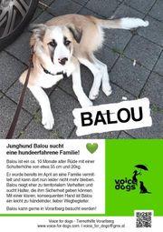 Balou sucht ein Zuhause