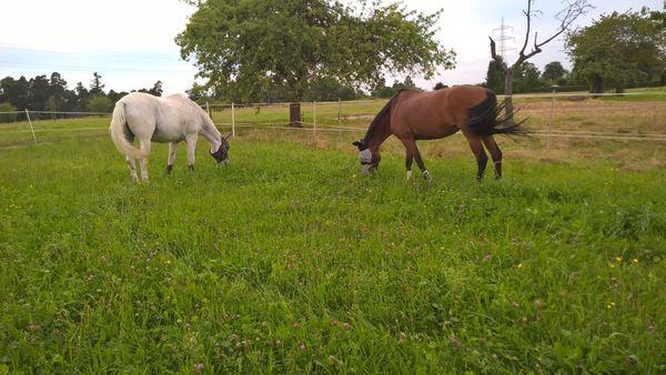 Du suchst Pferde zum Bewegen