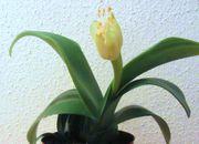Zimmerpfflanzen für Marissa