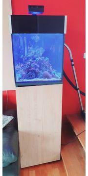 125 Liter komplett Meerwasser Aquarium