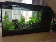 54 l Aquarium
