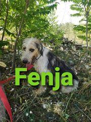 Der Terrier-Mix-Rüde Welpe Fenja sucht