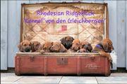 Rhodesian Ridgeback Wurfplanung