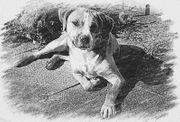 Liebevolle Hundebetreuung Tagesbetreuung Tiersitting Pension