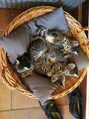 suesse Katzenkinder abzugeben