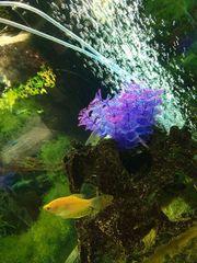 Aquarium Eckaquarium 190 Liter Juwel