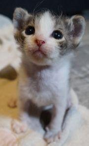 Bezaubernde Kitten