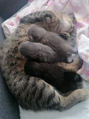 3 Kitten in liebevolle Hände