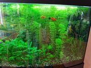 Aquarium- Auflösung