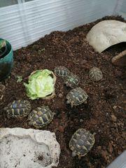 Schildkrötenbabys