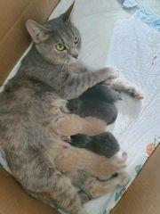 Katzen In Denkendorf Kaufen Und Verkaufen Bei Quoka De