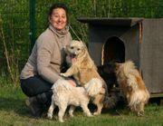 Sorgen Hundeflüsterer hilf - komm zum