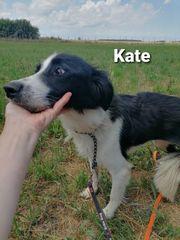 Die wundervolle Kate sucht ein