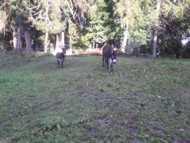 Pferdeboxen, Stellplätze - Esel