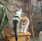 Katzenbabys süße Kätzchen