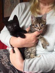 zuckersüße Kätzchen suchen ein neues