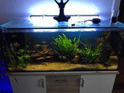 120cm Aquarium Anfertigung von Matt