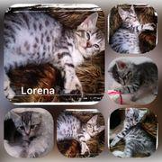 Baby Katze Kitten Lorena sucht
