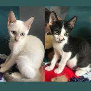 Kätzchen Leonie und Lillian möchten