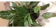 4 Pflanzen zu verschenken