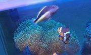 Korallenwächter Meerwasser