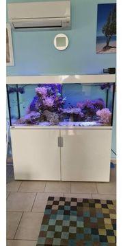Meerwasseraquarium Eheim Incpiria 400 komplett
