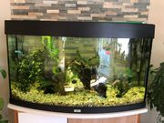Aquarium Juwel 180 L Panoramascheibe