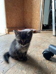 Katzenbaby sucht neues Zuhase