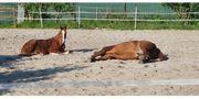 Biete Urlaubsbetreuung Pferdebetreuung Pferdetherapie