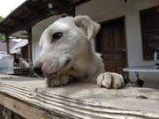 Hündin Baia sucht ihr Zuhause