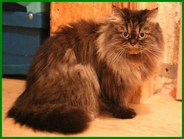 Lillyfee, ca. 6, » Katzen