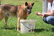 Dingo 10 Jahre sucht einen