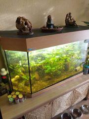 6-Eck Aquarium