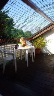 Katzenpension-Lindlar hat Plätze frei