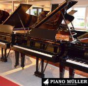 Hamburger Konzertflügel Steinway &