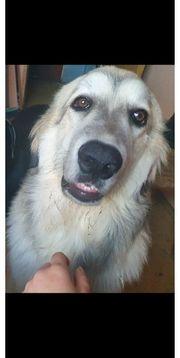 Großer Hund