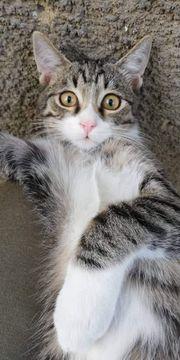 Sanfter Katzenjunge Gino sucht sein