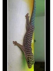 Reptilien abzugeben
