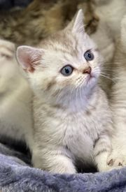 wunderschönen Kitten suchen ein neues