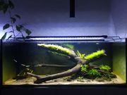 Biete regelmäßige Aquariumpflege an
