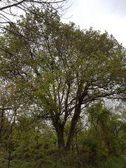 Baum Holz zu verschenken