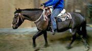 Süßes Pony für