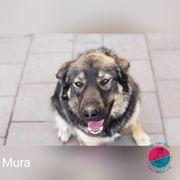 Mura- schüchterne Hundedame sucht geduldige