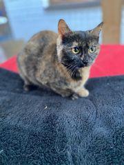 Stella - junge Katze sucht ein