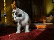4 kleine Katzen (