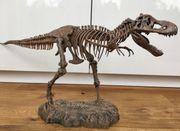 Riesen Dinosaurierskelett Tyrannosaurus Rex