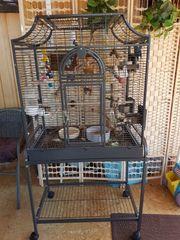 Ein Pärchen Sperlingspapageien mit Käfig