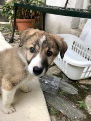 NOTFALL Hundemädchen Shanti benötigt Rolli